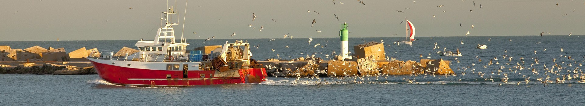 chalutier port de pêche de Sète