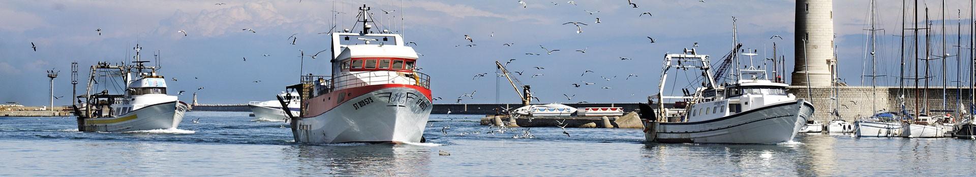 Visiter Sète - port de pêche