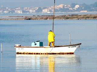 Austern und Muscheln aus Bouzigues