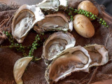 Coquillages-et-crustacés-2