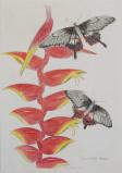 cendrina-collet-encre-crayo