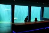 Seaquarium au Grau du Roi observatoire sous marin