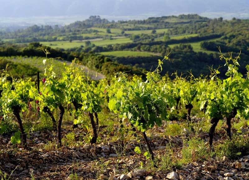Mas Daumas Gassac - Domaine viticole