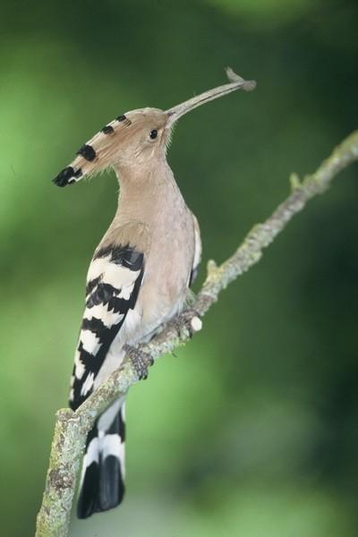 Oiseaux Camargue