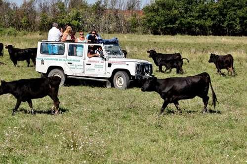 Pierrot le Camarguais - safari 4 X 4