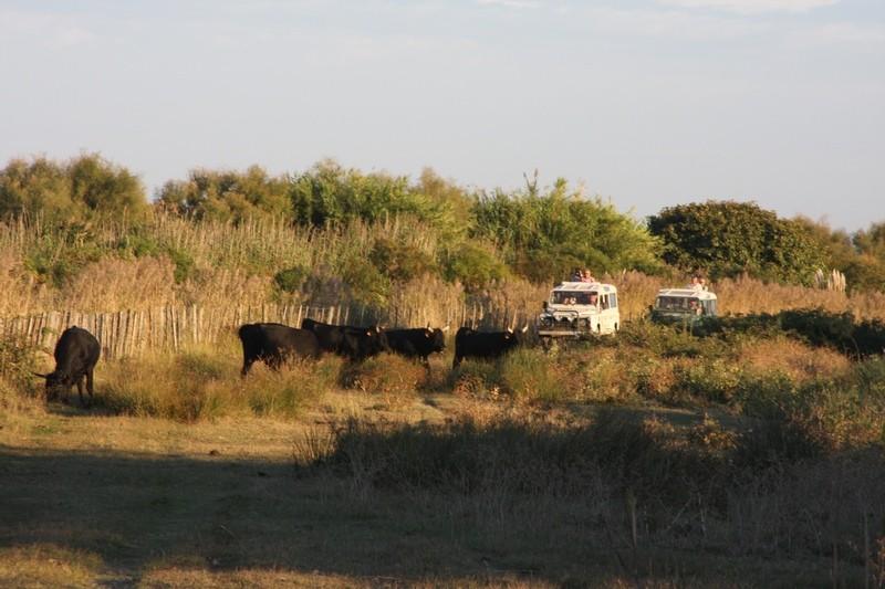 Safari en 4 x 4