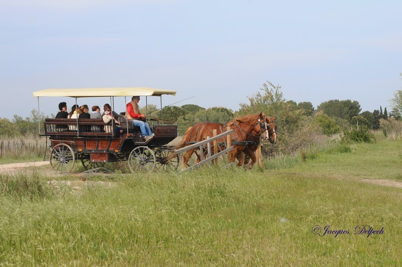 Safari en calèche