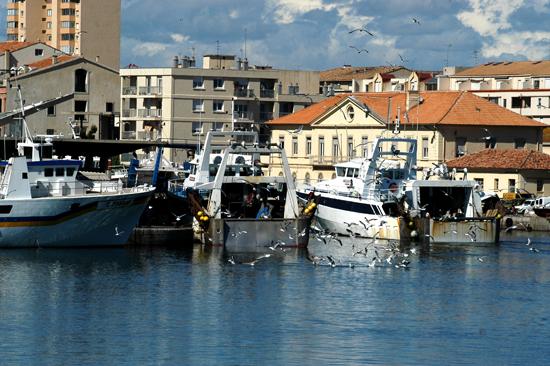 chalutiers-peche-service-co-5793122 - © Ville de Sète