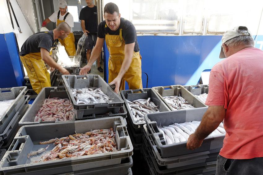 gastronomie-poisson-jp-dega-5793123 - © Ville de Sète