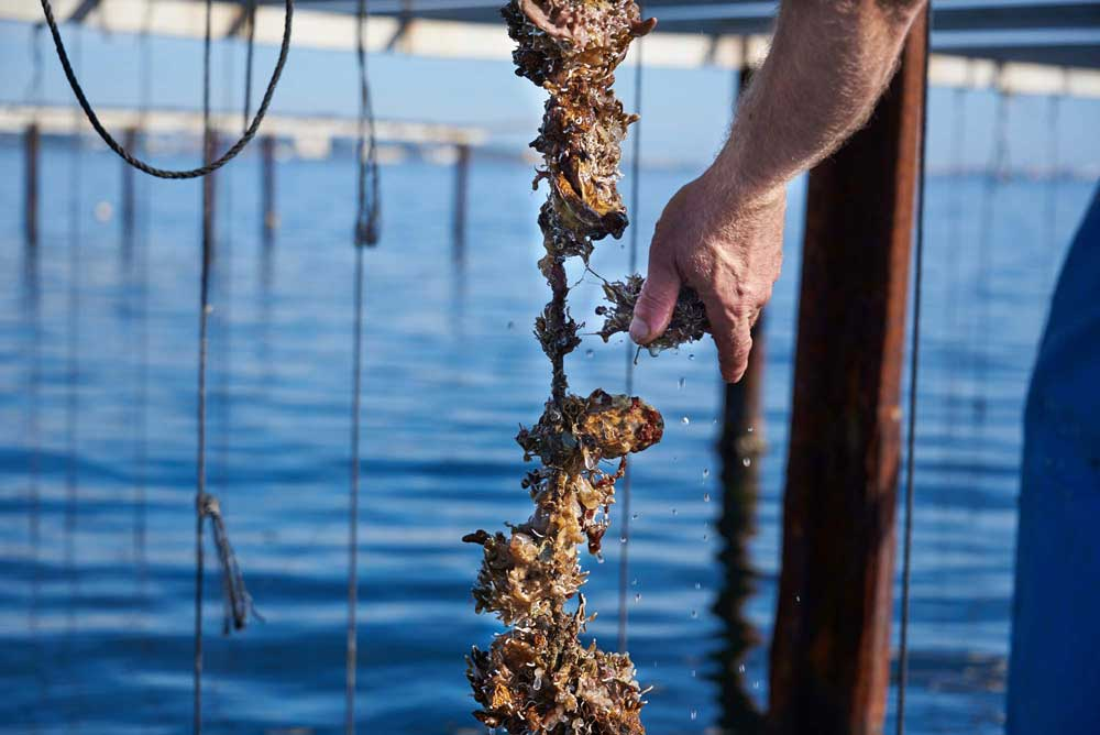 degustation-coquillage-restaurant-archipel-thau-huitres-moules