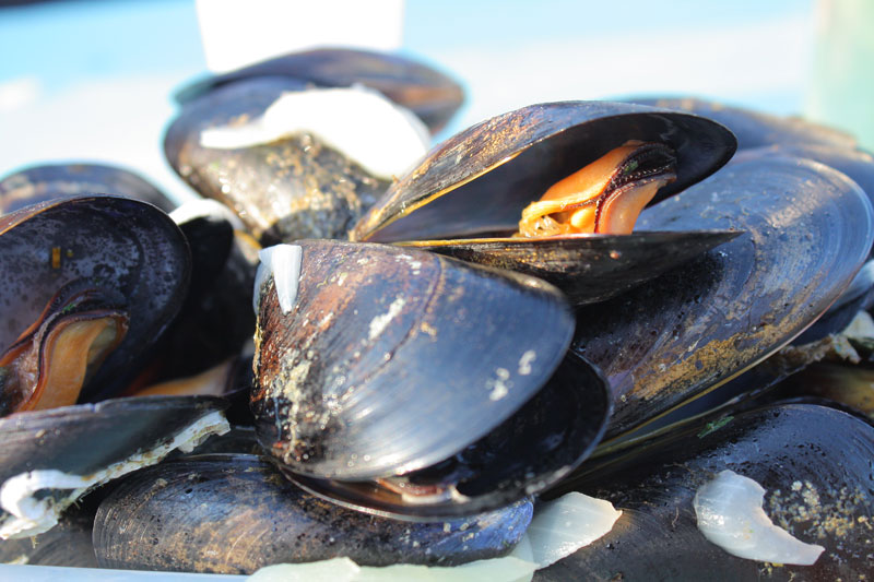moules-coquillages-thau - © Hugo Da Costa