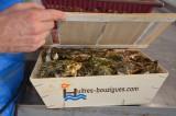 huitres-bouzigues.com