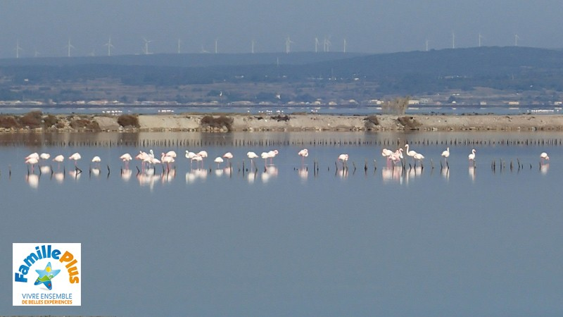 kayakmed-circuit-flamand-rose