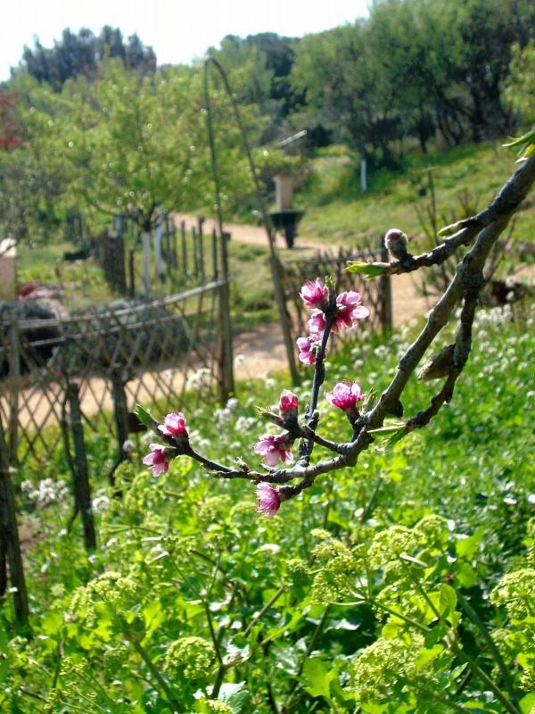 photo-jardin-antique-m-diterran-en-5624870