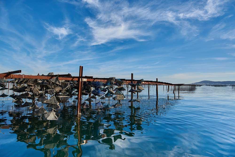 parcs-huitres-bassin-thau-archipel